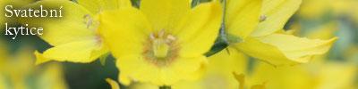 Kulatá svatební kytice z krémových růží Vendela v síťce z perliček