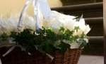 Svatba pod Petřínem