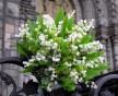Romantická svatební kytice konvalinek
