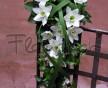 Převislá svatební kytice z exotických květů Eucharis