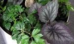 Návrhy a vybavení interieru pokojovými rostlinami